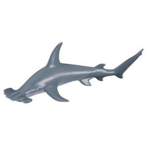 Σφυροκέφαλος Καρχαρίας