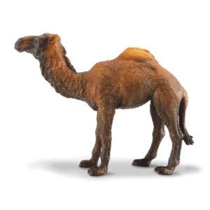 Δρομάδα Καμήλα