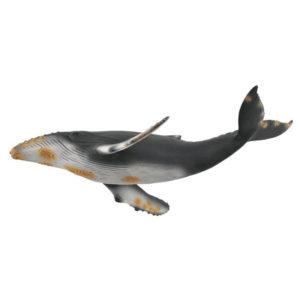 Μεγάπτερη Φάλαινα