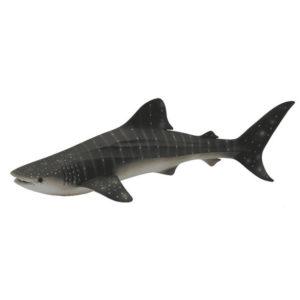 Φαλαινοκαρχαρίας
