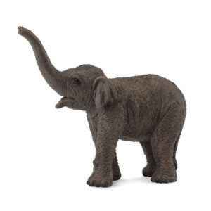 Ασιατικό Ελεφαντάκι