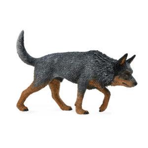 Αυστραλιανός Σκύλος Βοοειδών