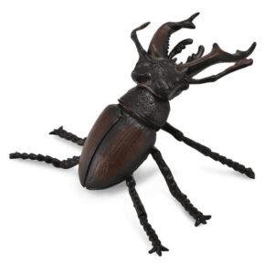 Σκαθάρι αρσενικό