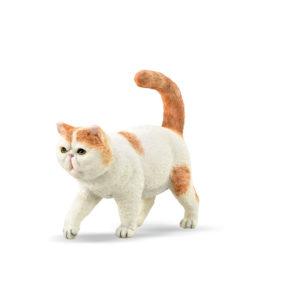 Εξωτική Κοντότριχη Γάτα